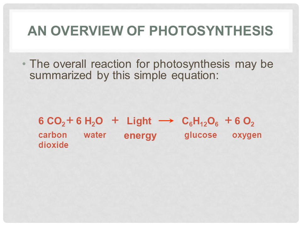 AN OVERVIEW OF PHOTOSYNTHESIS The overall reaction for photosynthesis may be summarized by this simple equation: 6 CO 2 carbon dioxide + 6 H 2 O water + Light energy C 6 H 12 O 6 glucose + 6 O 2 oxygen