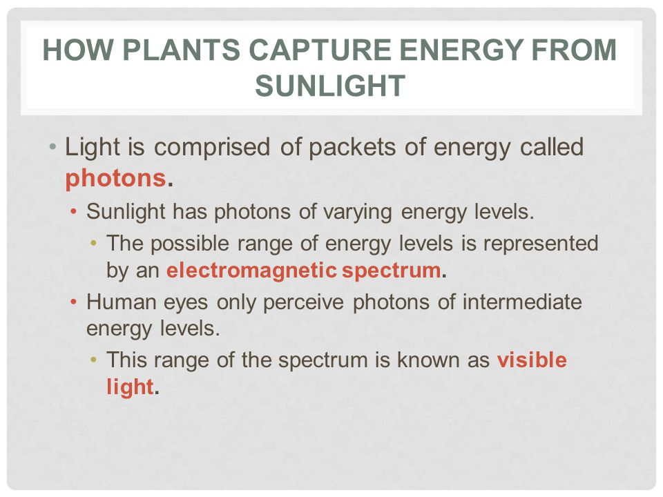 HOW PLANTS CAPTURE ENERGY FROM SUNLIGHT Light is comprised of packets of energy called photons.