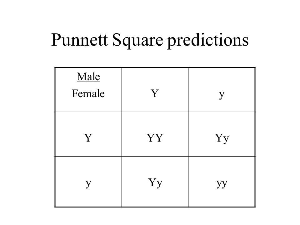 Punnett Square predictions Male FemaleYy YYYYy y yy