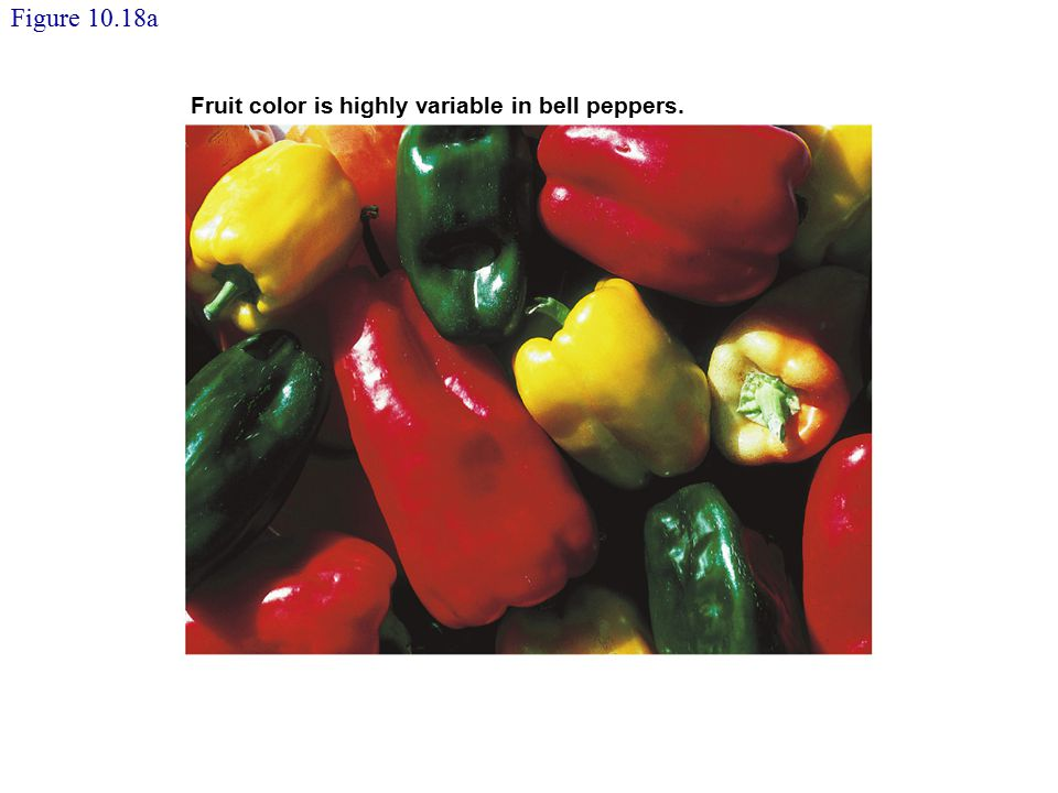 Figure 10.18a Fruit color is highly variable in bell peppers.
