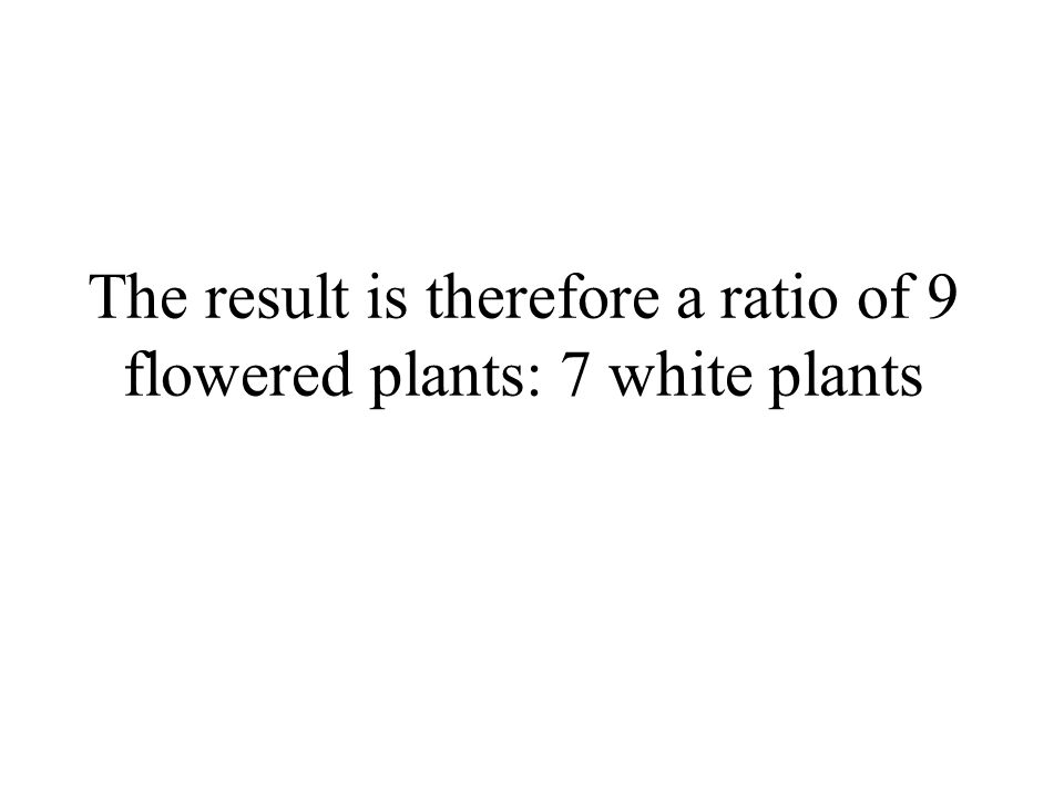 The result is therefore a ratio of 9 flowered plants: 7 white plants