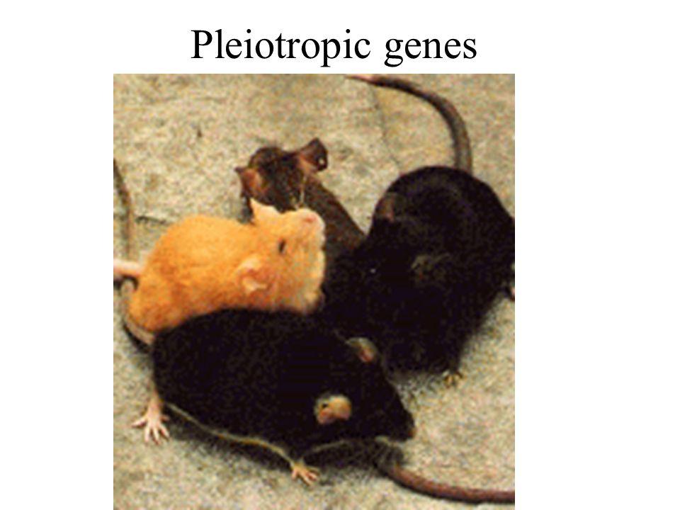 Pleiotropic genes