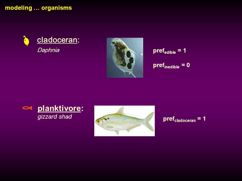cladoceran: Daphnia planktivore: gizzard shad pref edible = 1 pref inedible = 0 pref cladoceran = 1