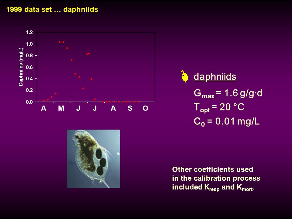1999 data set … daphniids A M J J A S O daphniids G max = 1.6 g/g·d T opt = 20 °C C 0 = 0.01 mg/L Other coefficients used in the calibration process i
