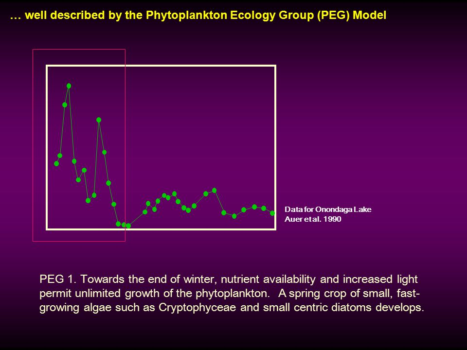 … well described by the Phytoplankton Ecology Group (PEG) Model PEG 1. Towards the end of winter, nutrient availability and increased light permit unl