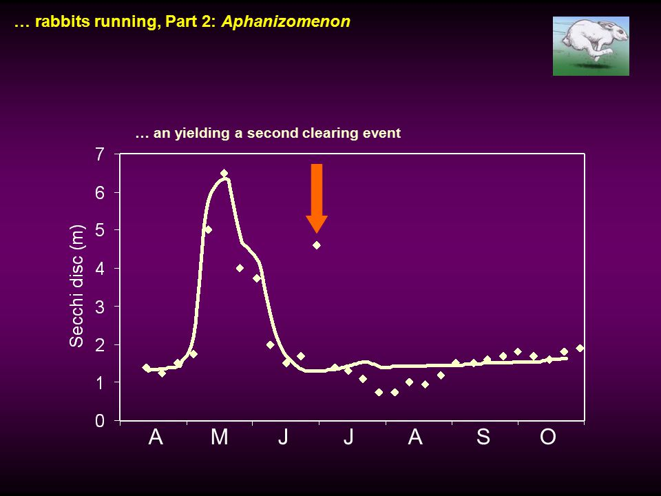 … rabbits running, Part 2: Aphanizomenon A M J J A S O … an yielding a second clearing event