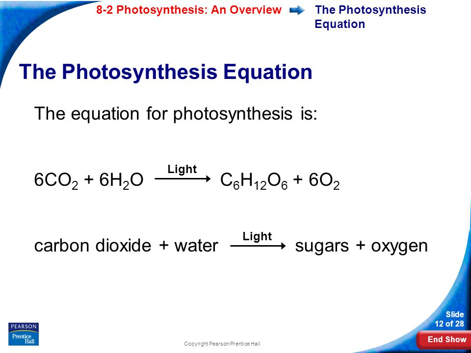 End Show Slide 12 of 28 8-2 Photosynthesis: An Overview Copyright Pearson Prentice Hall The Photosynthesis Equation The equation for photosynthesis is: 6CO 2 + 6H 2 O C 6 H 12 O 6 + 6O 2 carbon dioxide + water sugars + oxygen Light