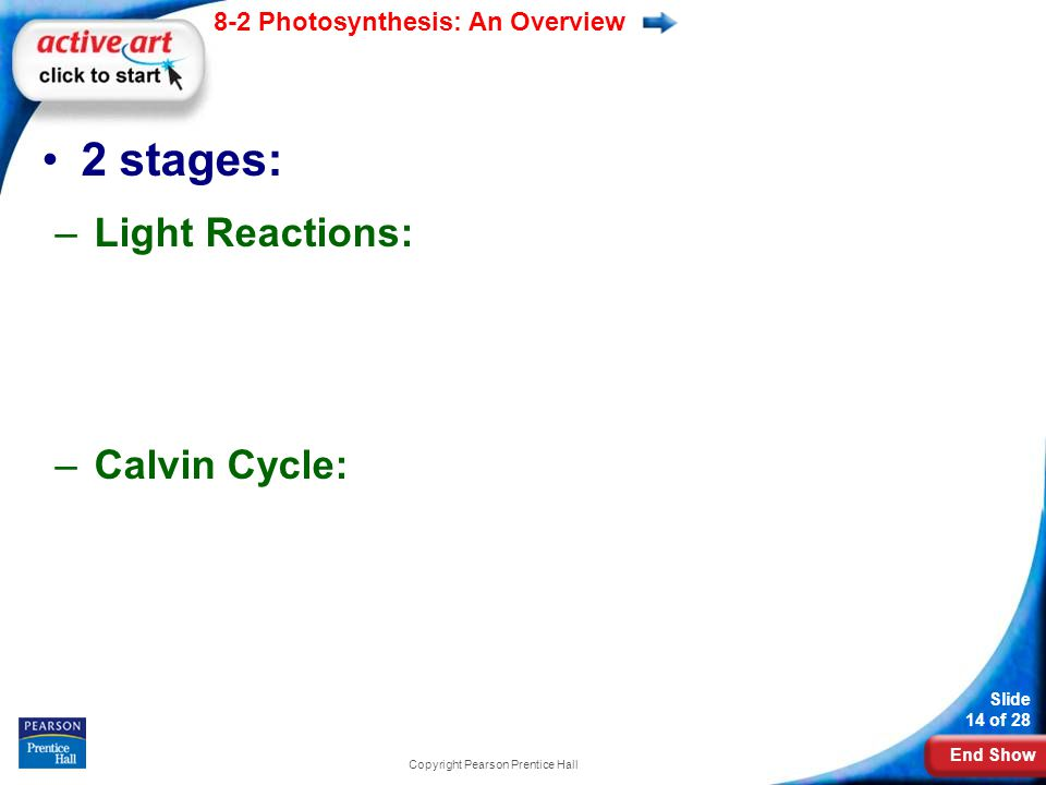 End Show Slide 14 of 28 8-2 Photosynthesis: An Overview 2 stages: –Light Reactions: –Calvin Cycle: Copyright Pearson Prentice Hall