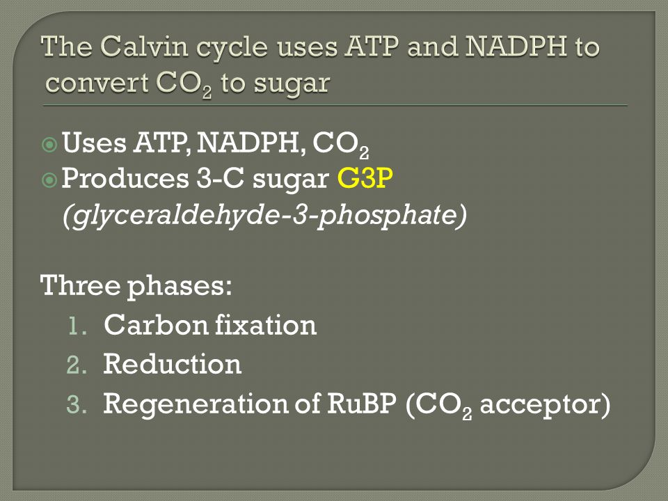 Uses ATP, NADPH, CO 2  Produces 3-C sugar G3P (glyceraldehyde-3-phosphate) Three phases: 1.