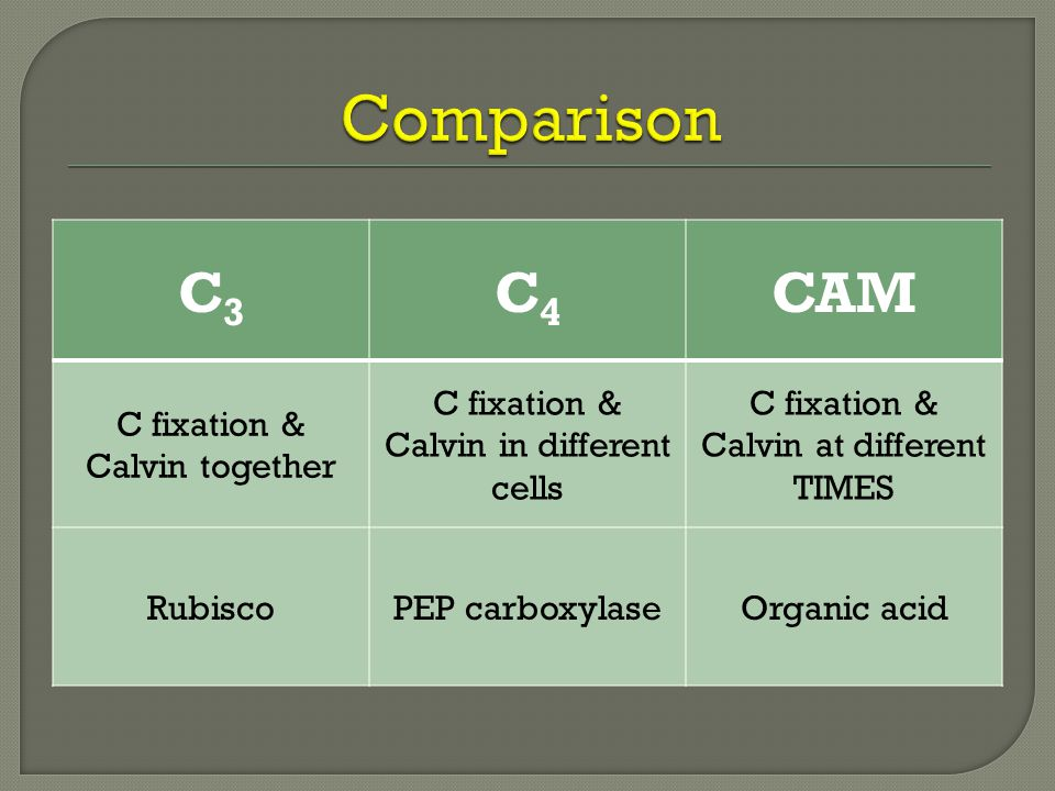 C3C3 C4C4 CAM C fixation & Calvin together C fixation & Calvin in different cells C fixation & Calvin at different TIMES RubiscoPEP carboxylaseOrganic acid