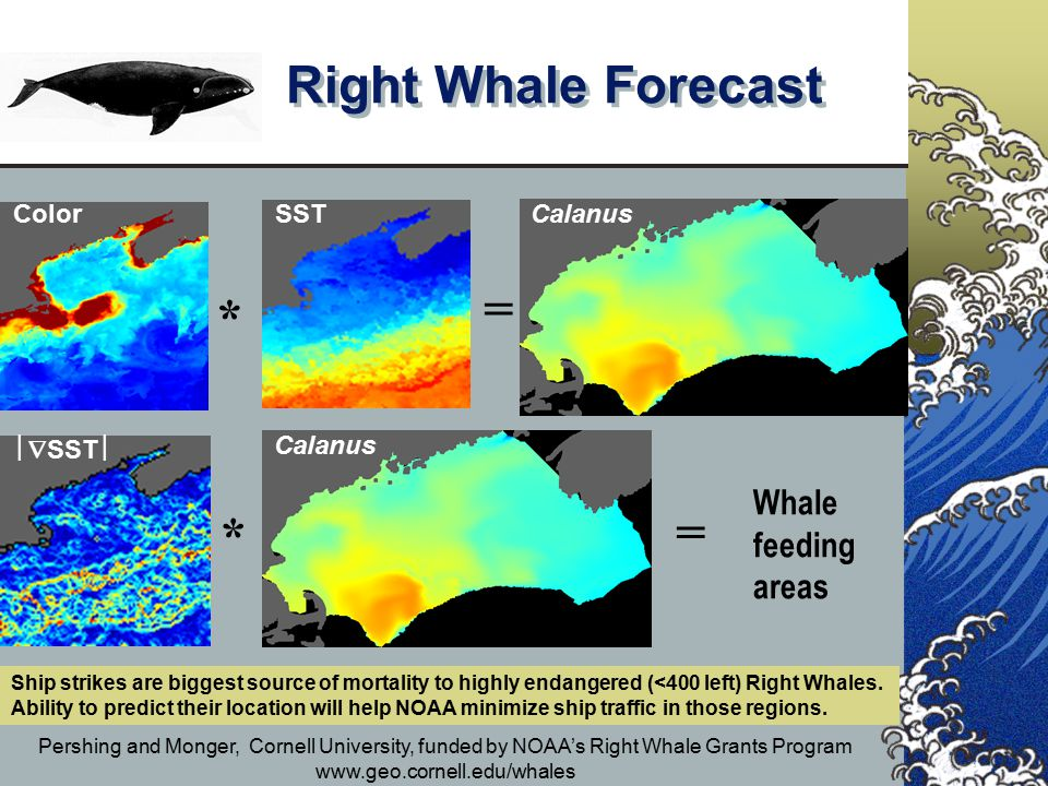 Right Whale Forecast Pershing and Monger, Cornell University, funded by NOAA's Right Whale Grants Program www.geo.cornell.edu/whales Color SST  SST