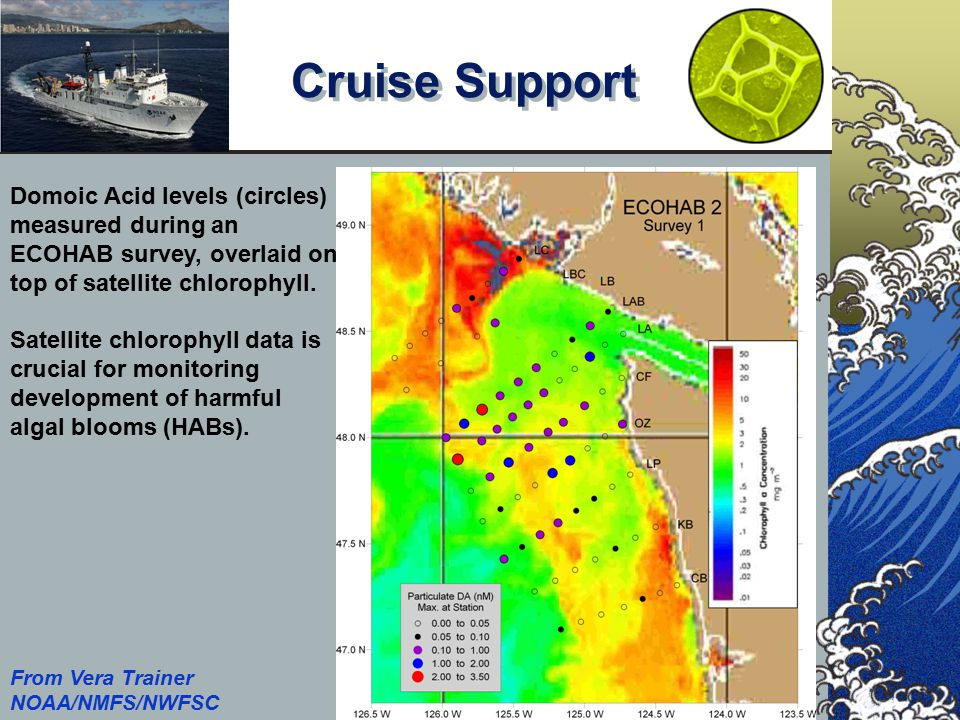 Cruise Support NOAA/NMFS/SWFSC PFEL Domoic Acid levels (circles) measured during an ECOHAB survey, overlaid on top of satellite chlorophyll. Satellite