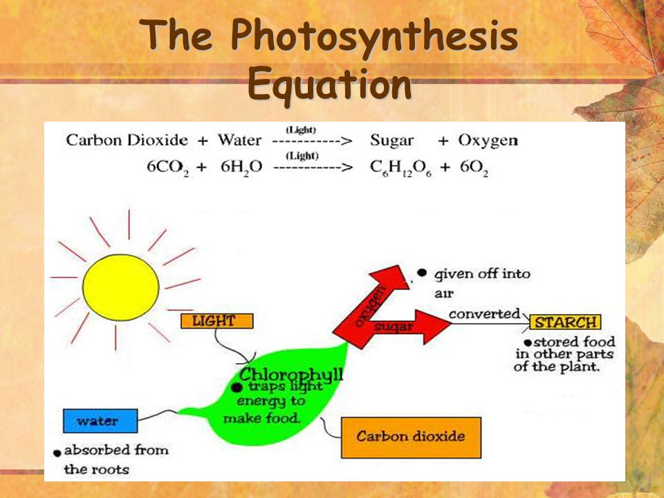14 The Photosynthesis Equation