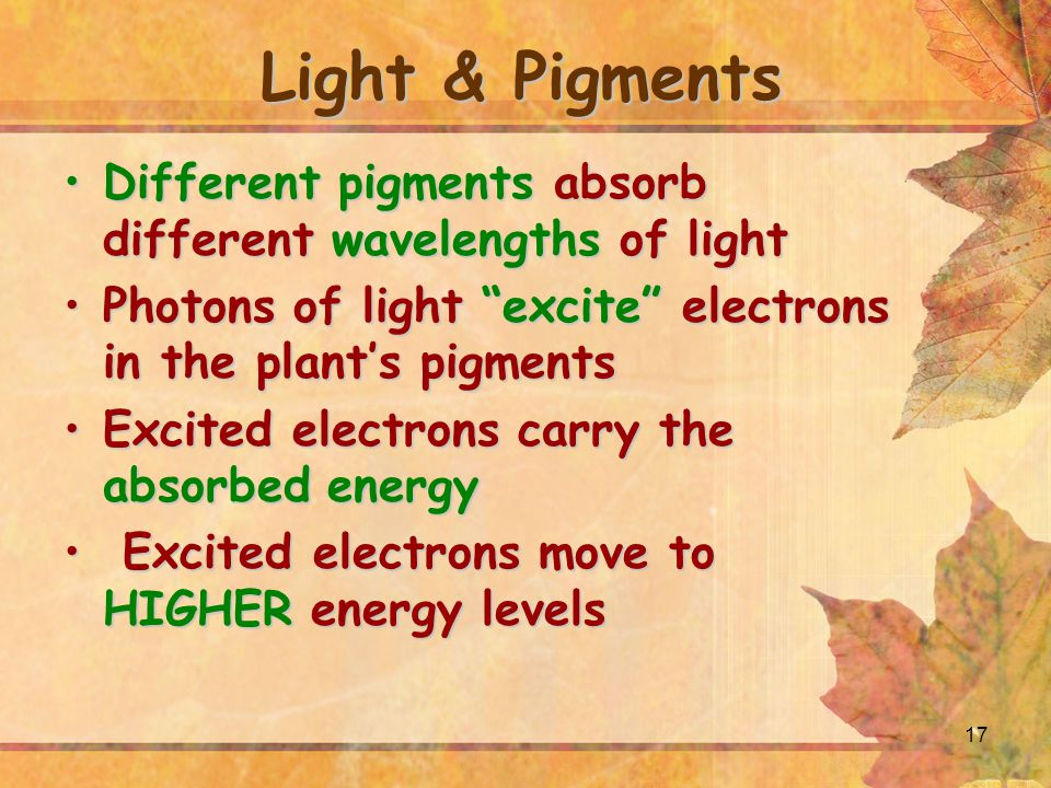 17 Light & Pigments Different pigments absorb different wavelengths of lightDifferent pigments absorb different wavelengths of light Photons of light