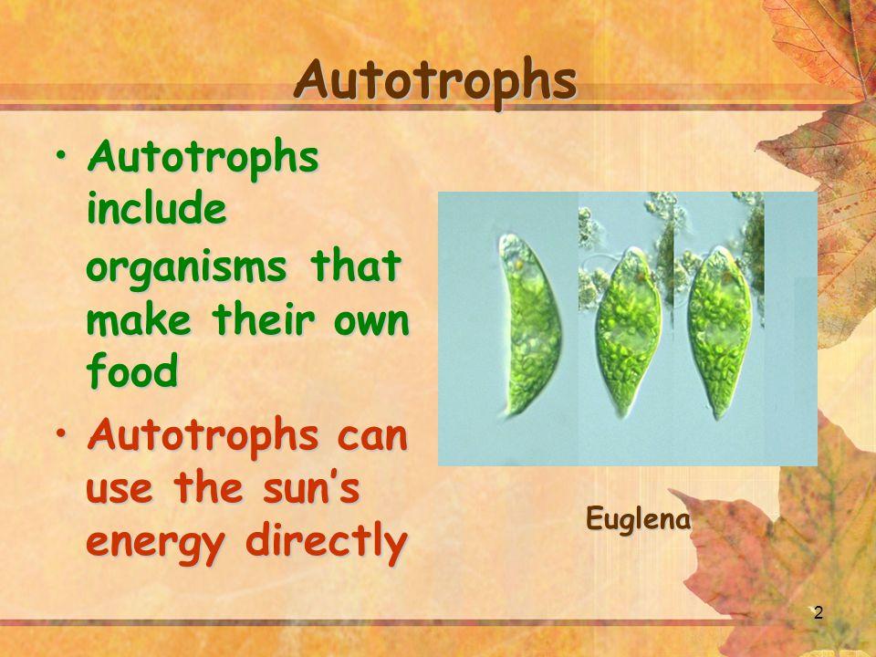 2 Autotrophs Autotrophs include organisms that make their own foodAutotrophs include organisms that make their own food Autotrophs can use the sun's e