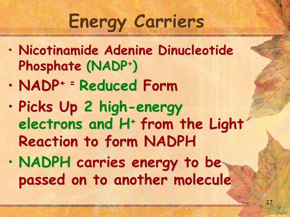 27 Energy Carriers Nicotinamide Adenine Dinucleotide Phosphate (NADP + )Nicotinamide Adenine Dinucleotide Phosphate (NADP + ) NADP + = Reduced FormNAD