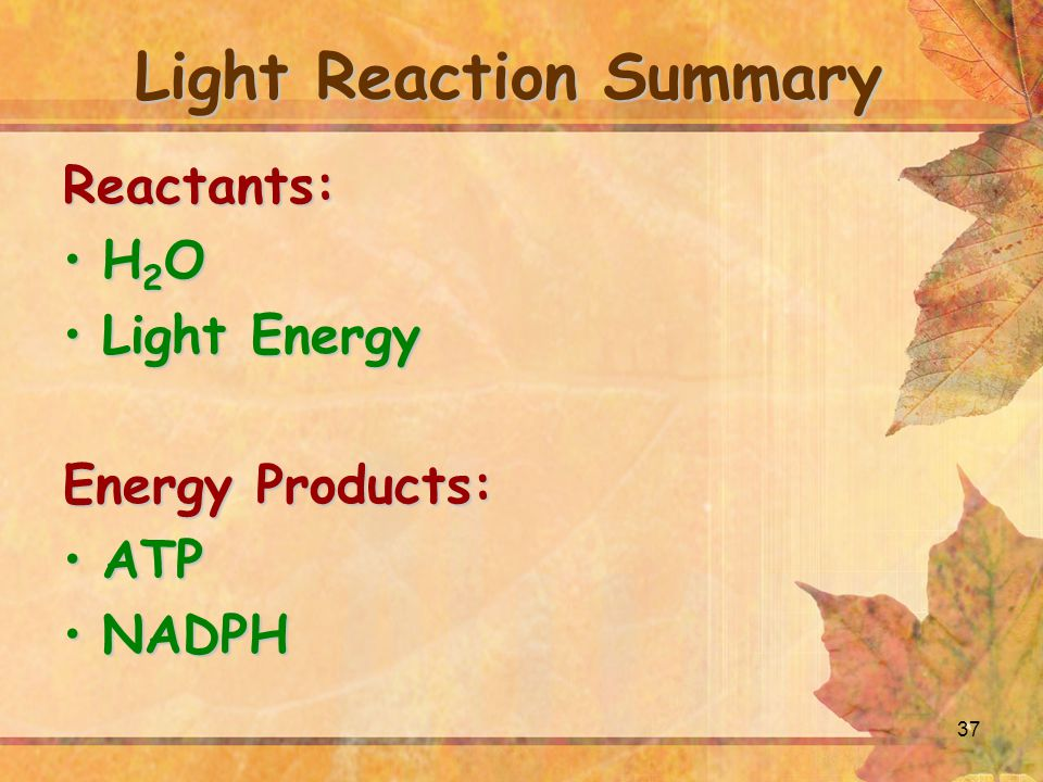 37 Light Reaction Summary Reactants: H 2 OH 2 O Light EnergyLight Energy Energy Products: ATPATP NADPHNADPH