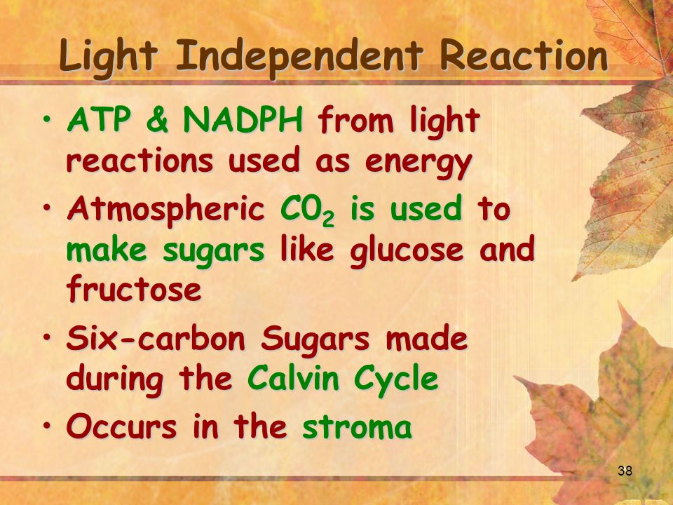 38 Light Independent Reaction ATP & NADPH from light reactions used as energyATP & NADPH from light reactions used as energy Atmospheric C0 2 is used