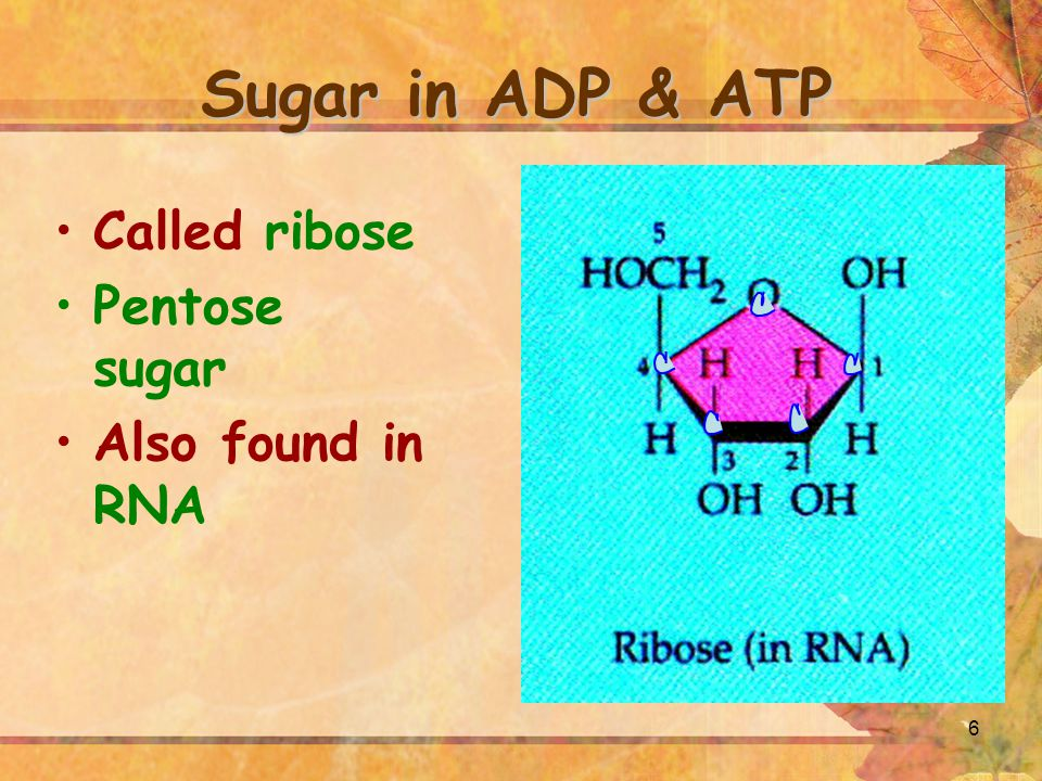 7 Importance of ATP Principal Compound Used To Store Energy In Living Organisms