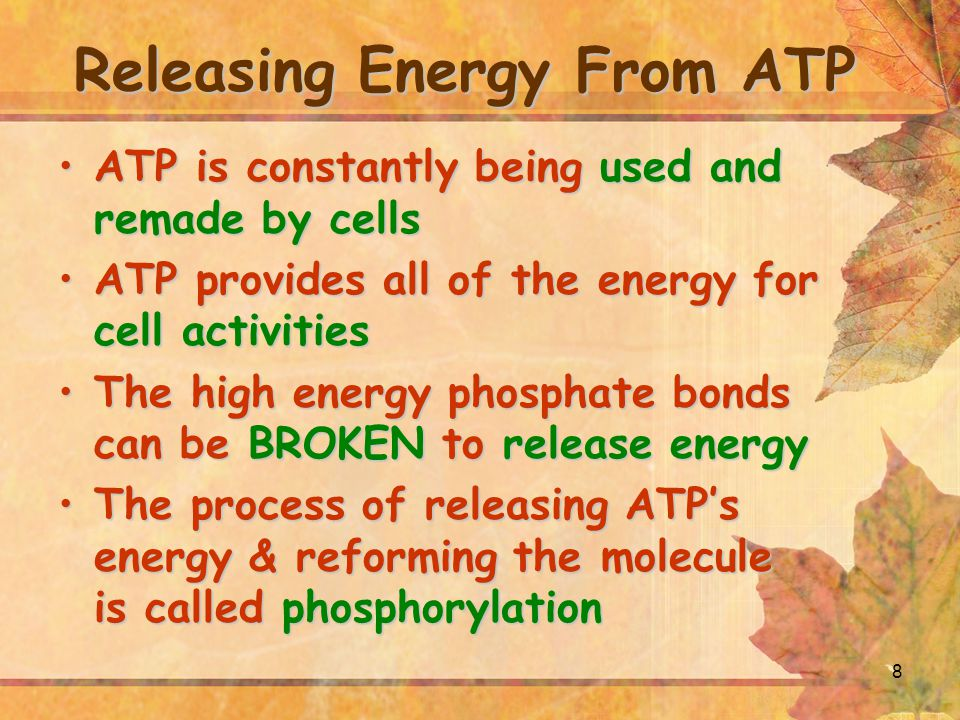 8 Releasing Energy From ATP ATP is constantly being used and remade by cellsATP is constantly being used and remade by cells ATP provides all of the e