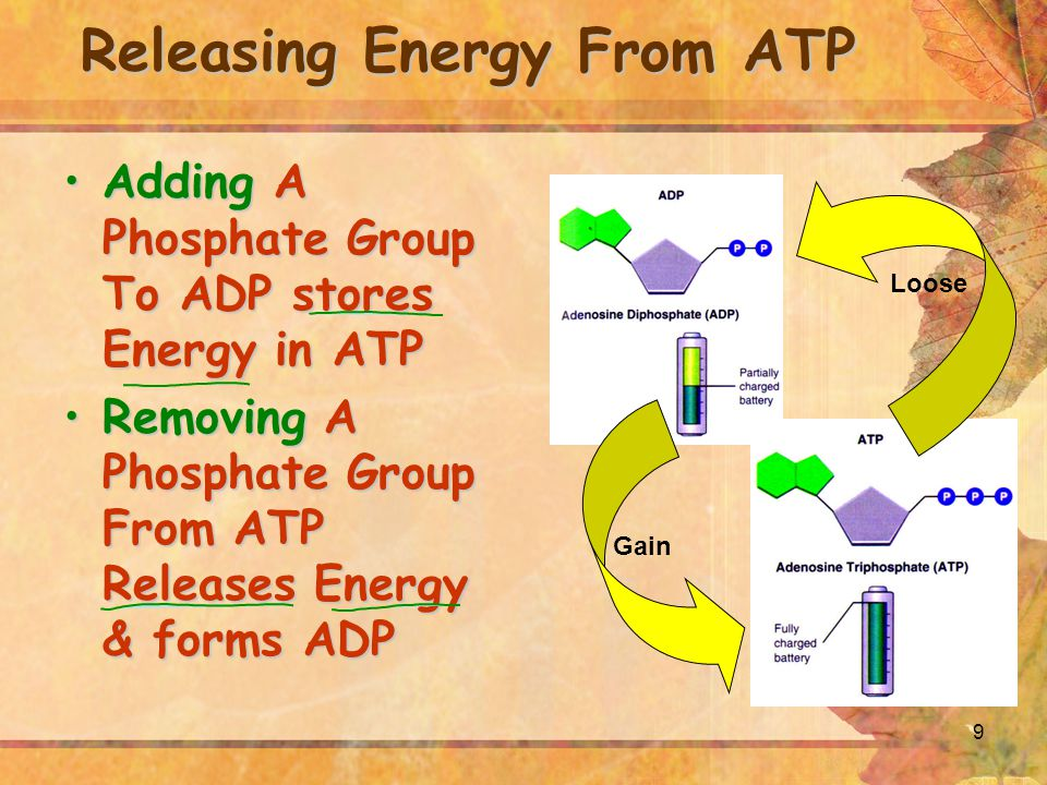 10 Cells Using Biochemical Energy Cells Use ATP For: Active transport Movement Photosynthesis Protein Synthesis Cellular respiration All other cellular reactions