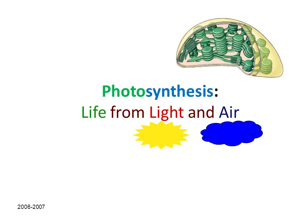Section Objectives Relate the structure of chloroplasts to the events in photosynthesis Describe light-dependent reactions.