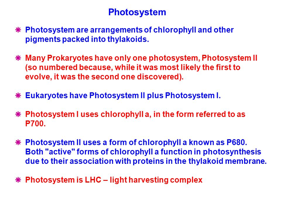  Photosystem are arrangements of chlorophyll and other pigments packed into thylakoids.  Many Prokaryotes have only one photosystem, Photosystem II