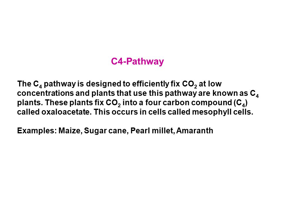 C4-Pathway The C 4 pathway is designed to efficiently fix CO 2 at low concentrations and plants that use this pathway are known as C 4 plants. These p