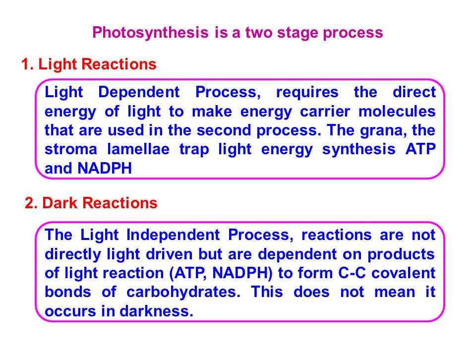 Non-Cyclic Photo phosphorylation