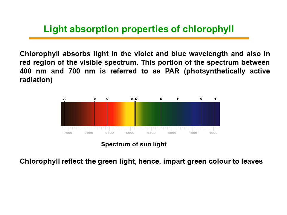 Chlorophyll absorbs light in the violet and blue wavelength and also in red region of the visible spectrum. This portion of the spectrum between 400 n