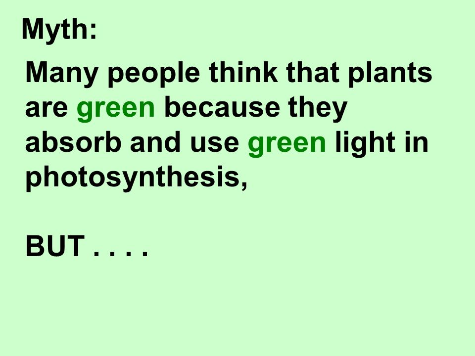 Many people think that plants are green because they absorb and use green light in photosynthesis, BUT....