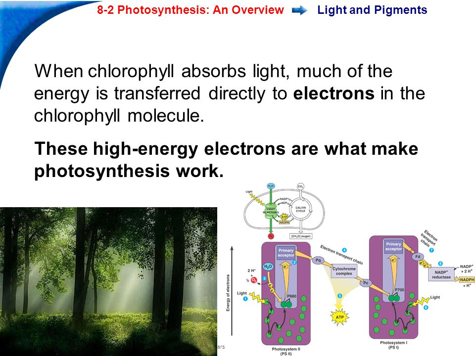 End Show Slide 11 of 28 8-2 Photosynthesis: An Overview Copyright Pearson Prentice Hall Light and Pigments When chlorophyll absorbs light, much of the energy is transferred directly to electrons in the chlorophyll molecule.