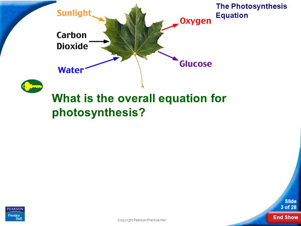 End Show Slide 3 of 28 8-2 Photosynthesis: An Overview Copyright Pearson Prentice Hall The Photosynthesis Equation What is the overall equation for photosynthesis