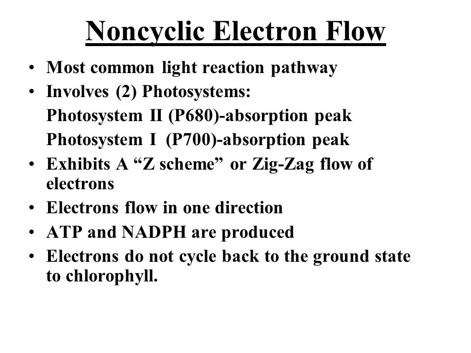 "Most common light reaction pathway Involves (2) Photosystems: Photosystem II (P680)-absorption peak Photosystem I (P700)-absorption peak Exhibits A ""Z"