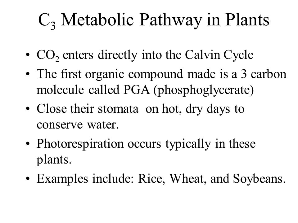 C 3 Metabolic Pathway in Plants CO 2 enters directly into the Calvin Cycle The first organic compound made is a 3 carbon molecule called PGA (phosphog