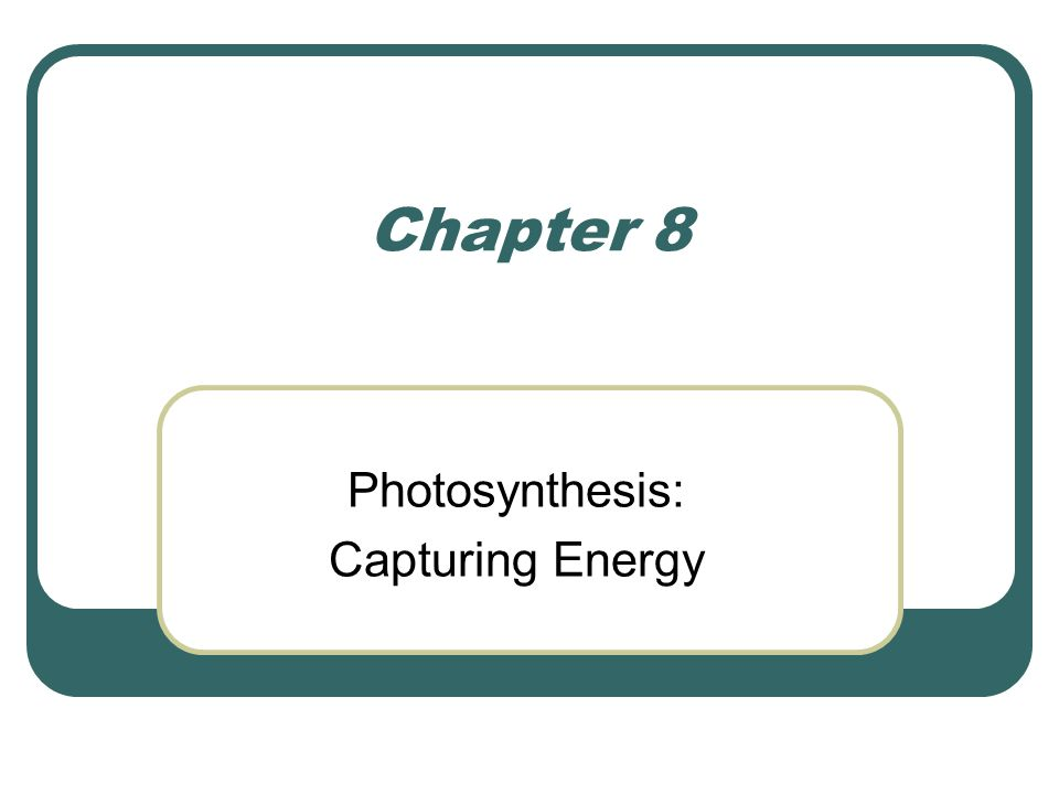 Chapter 8 Photosynthesis: Capturing Energy
