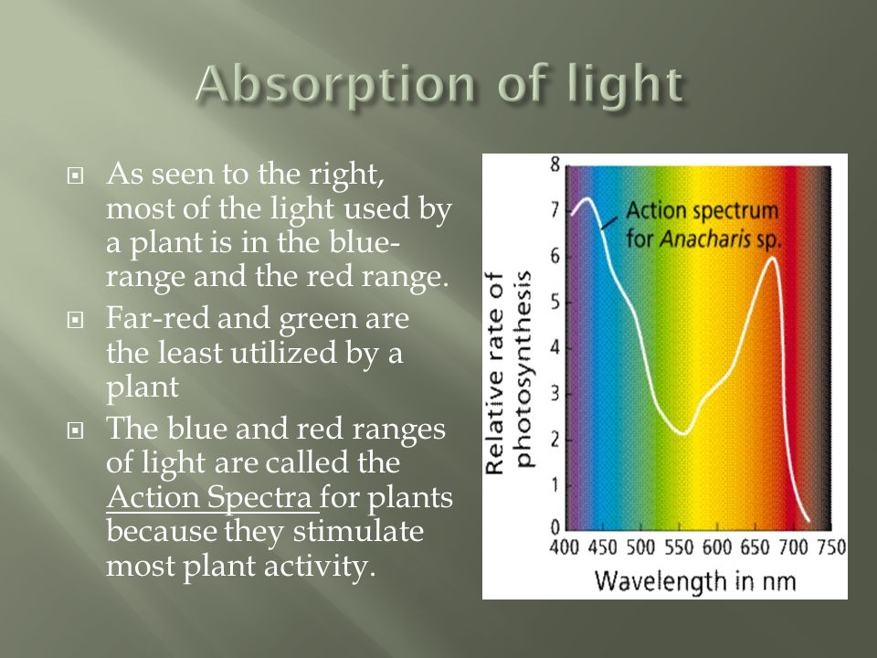  As seen to the right, most of the light used by a plant is in the blue- range and the red range.