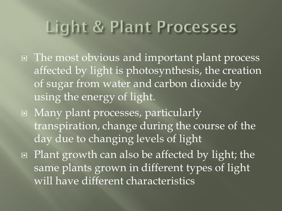  The most obvious and important plant process affected by light is photosynthesis, the creation of sugar from water and carbon dioxide by using the energy of light.