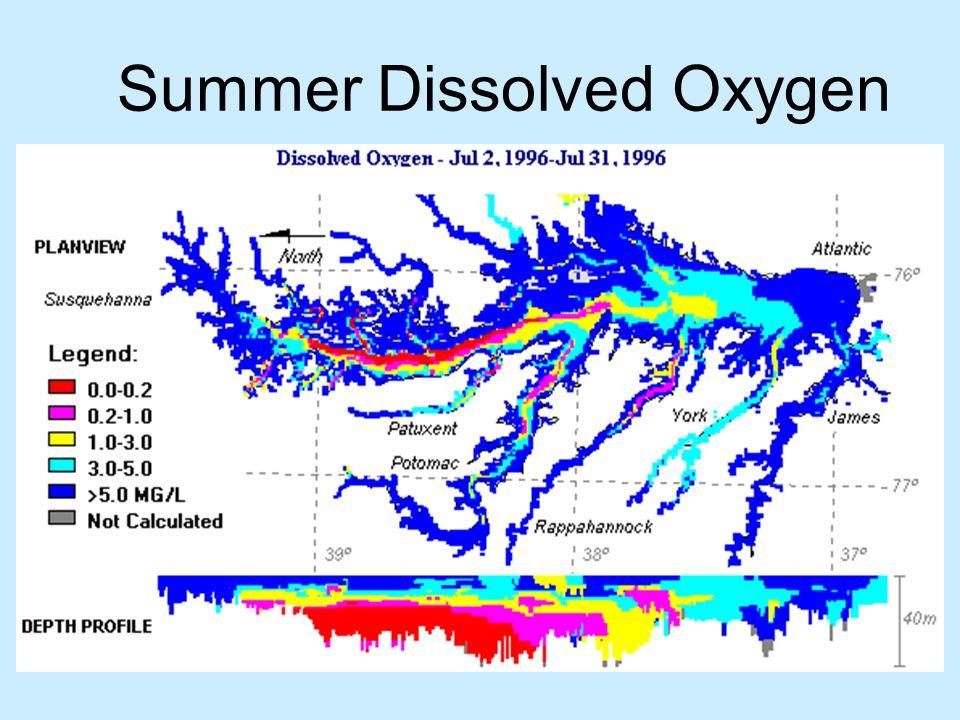 Summer Dissolved Oxygen