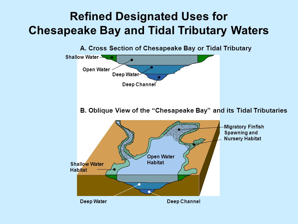 Refined Designated Uses for Chesapeake Bay and Tidal Tributary Waters A.