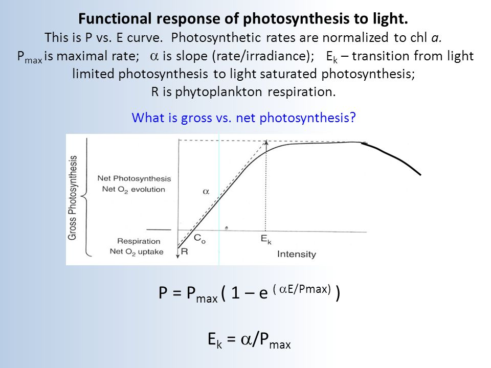 Functional response of photosynthesis to light. This is P vs. E curve. Photosynthetic rates are normalized to chl a. P max is maximal rate;  is slop