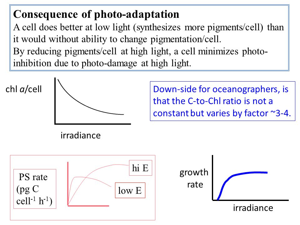 Consequence of photo-adaptation A cell does better at low light (synthesizes more pigments/cell) than it would without ability to change pigmentation/