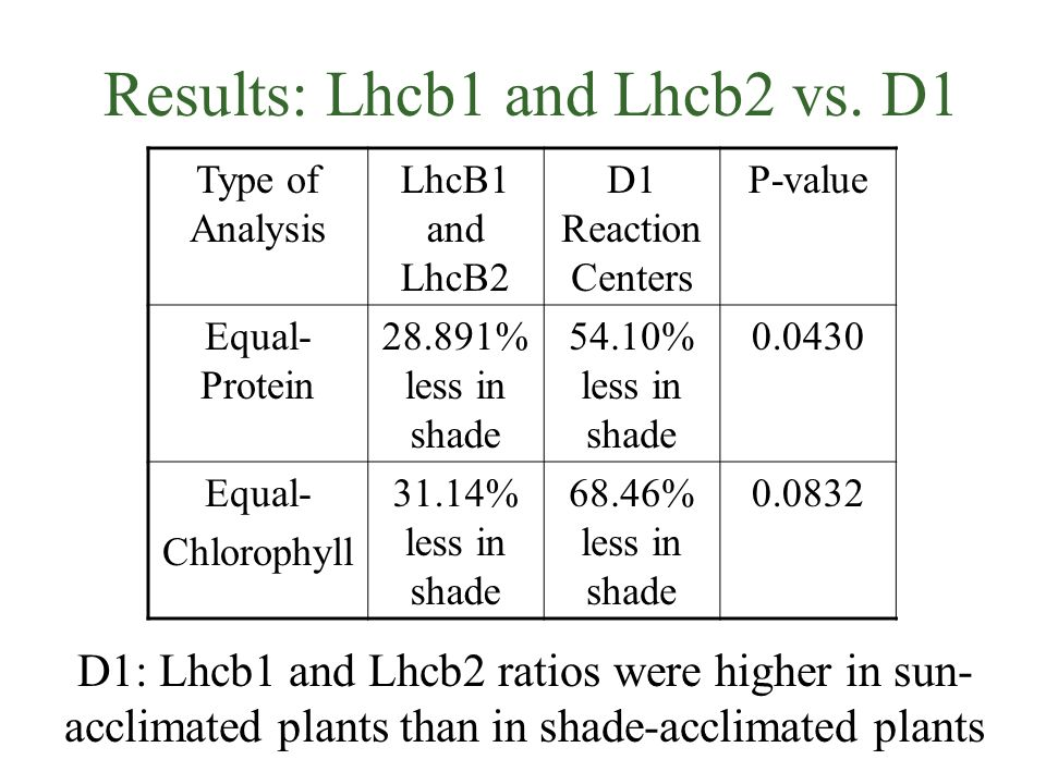 Results: Lhcb1 and Lhcb2 vs.