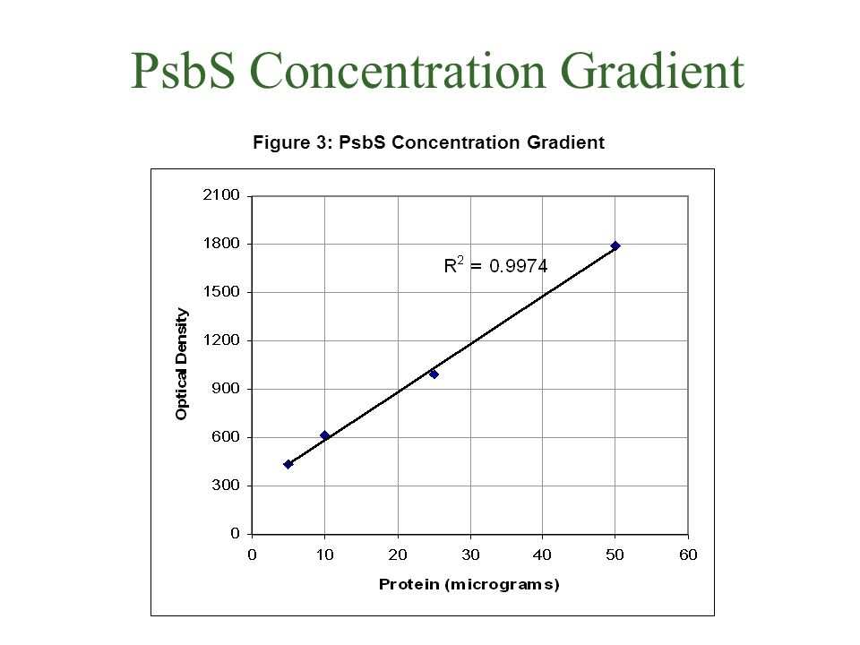 PsbS Concentration Gradient Figure 3: PsbS Concentration Gradient