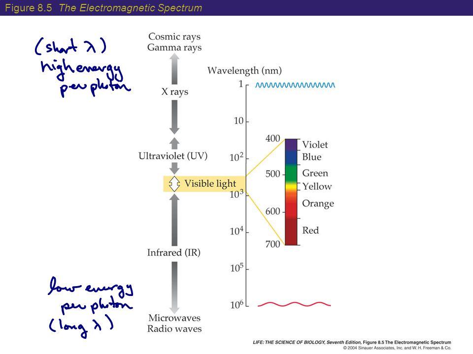 Figure 8.5 The Electromagnetic Spectrum