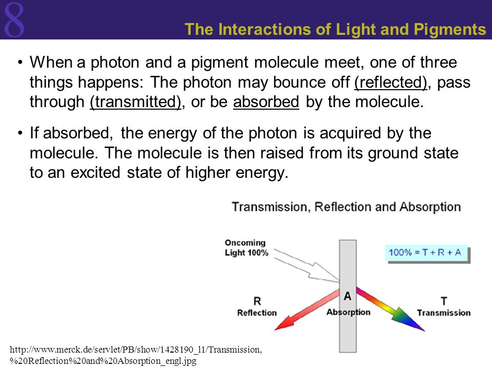 8 The Interactions of Light and Pigments When a photon and a pigment molecule meet, one of three things happens: The photon may bounce off (reflected), pass through (transmitted), or be absorbed by the molecule.