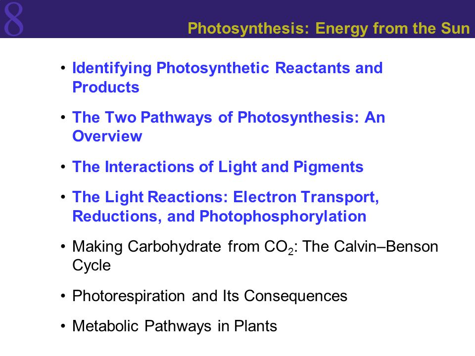 8 Identifying Photosynthetic Reactants and Products The Two Pathways of Photosynthesis: An Overview The Interactions of Light and Pigments The Light Reactions: Electron Transport, Reductions, and Photophosphorylation Making Carbohydrate from CO 2 : The Calvin–Benson Cycle Photorespiration and Its Consequences Metabolic Pathways in Plants