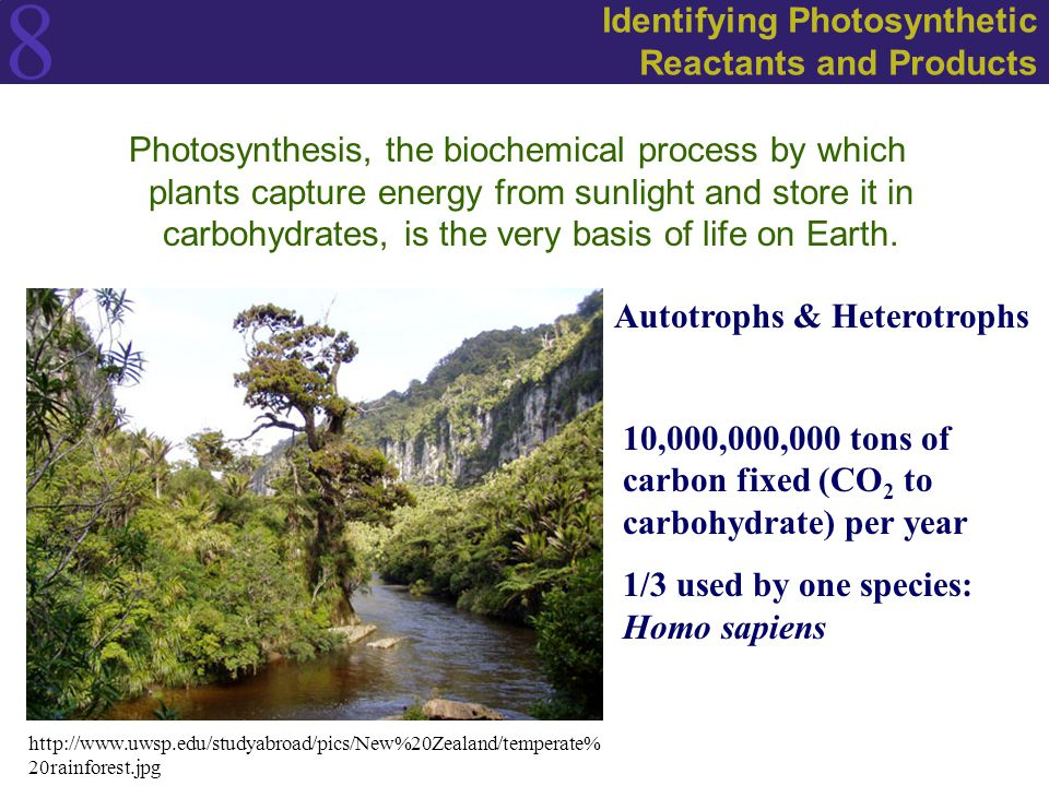 8 Identifying Photosynthetic Reactants and Products Photosynthesis, the biochemical process by which plants capture energy from sunlight and store it in carbohydrates, is the very basis of life on Earth.