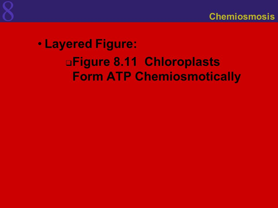 8 Chemiosmosis Layered Figure:  Figure 8.11 Chloroplasts Form ATP Chemiosmotically