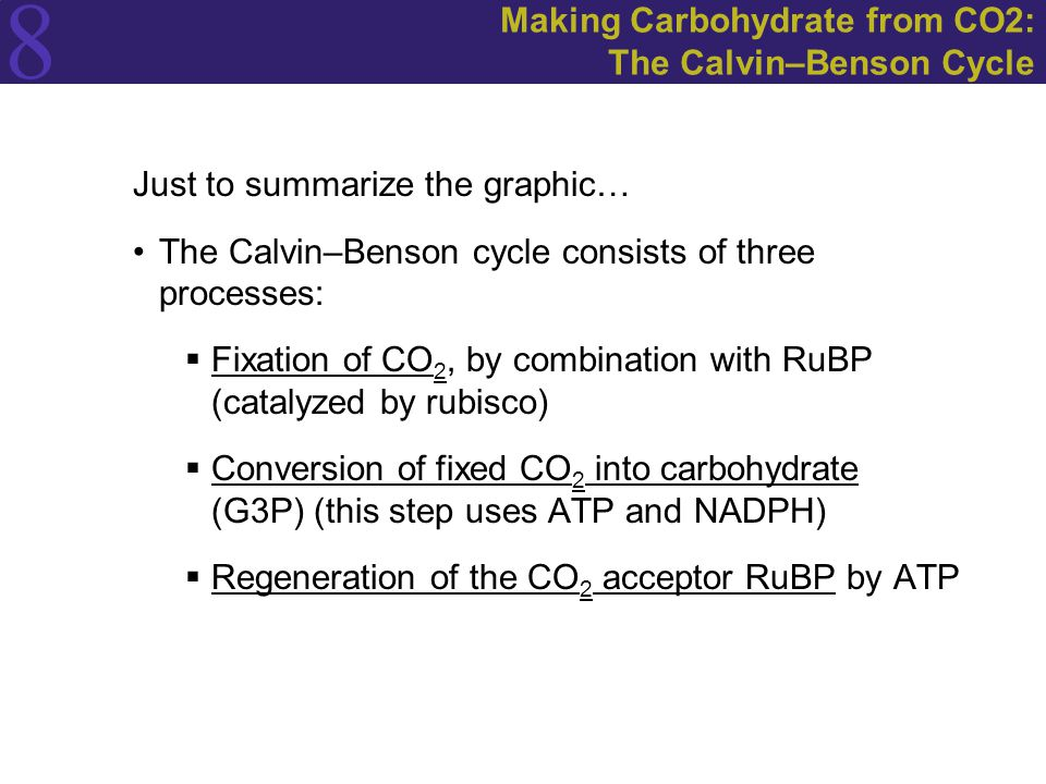 8 Making Carbohydrate from CO2: The Calvin–Benson Cycle Just to summarize the graphic… The Calvin–Benson cycle consists of three processes:  Fixation of CO 2, by combination with RuBP (catalyzed by rubisco)  Conversion of fixed CO 2 into carbohydrate (G3P) (this step uses ATP and NADPH)  Regeneration of the CO 2 acceptor RuBP by ATP